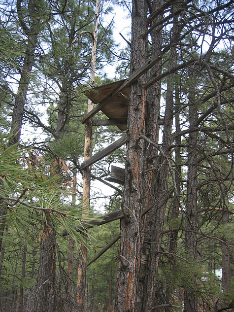 treehouse in New Mexico
